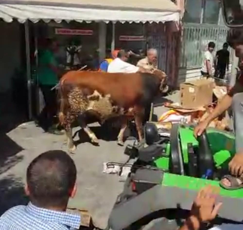 Malatya'da Sahibinden kaçan kurbanlık tosun tatlıcı dükkanına daldı