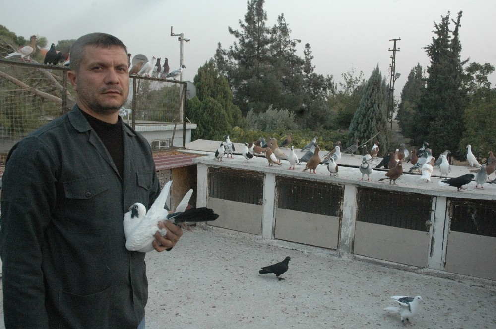 Ölümüne güvercin tutkusu