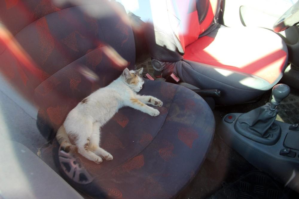 Kaybettiği kedisini ihbar üzerine otomobilinde uyurken buldu