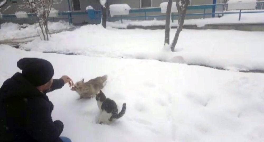 Aç kalan tilkiyi elleriyle beslediler