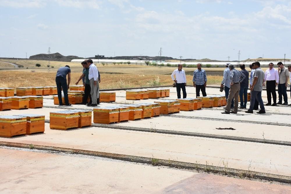 Kahta'da arıcılara bin kovan Kafkas Arısı desteği