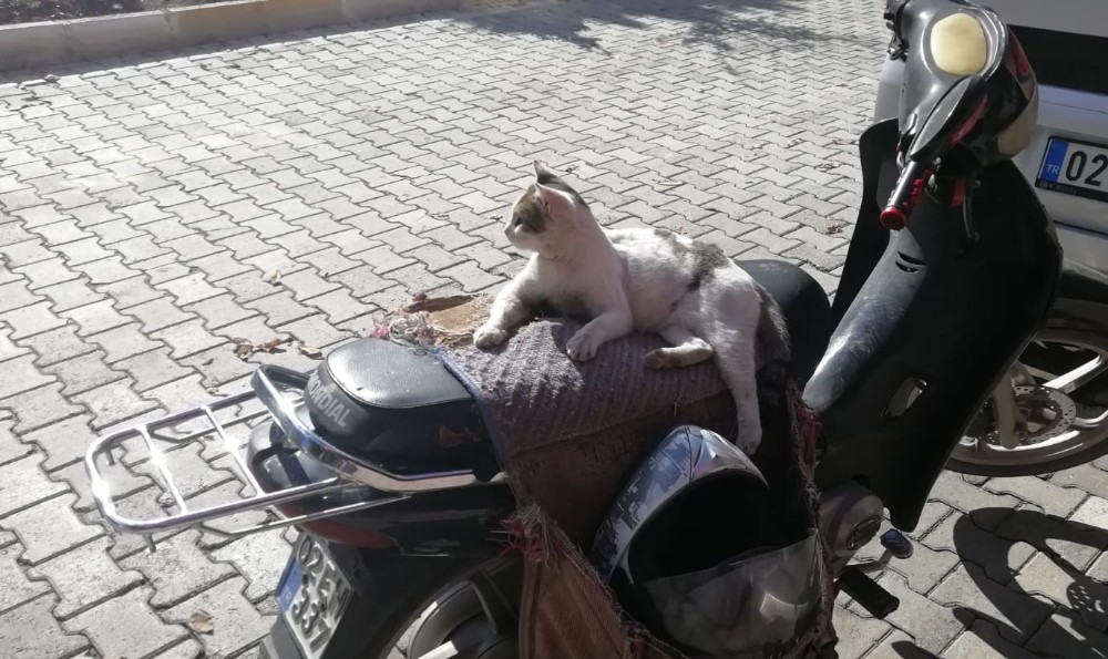 Güneşli hava sokak hayvanlarına yaradı
