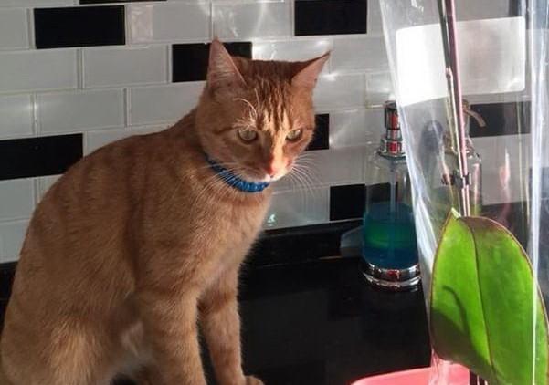 Kayıp kedisini her yerde arıyor