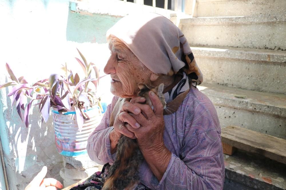 Otomobilin çarptığı kedisinin ardından gözyaşı döken yaşlı kadın yürek burktu