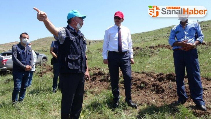 648 bin Sivaslı adına fidan dikilecek
