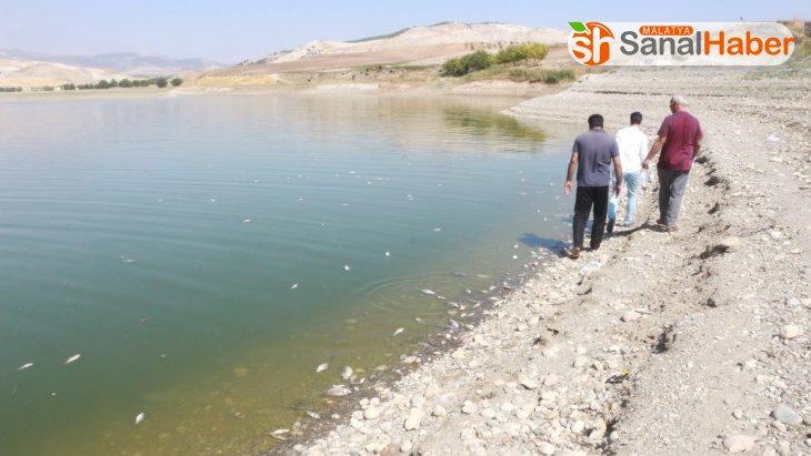Adıyaman'da korkutan balık ölümleri