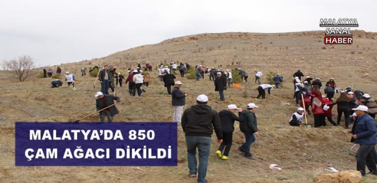 MALATYA'DA 850 ÇAM AĞACI DİKİLDİ