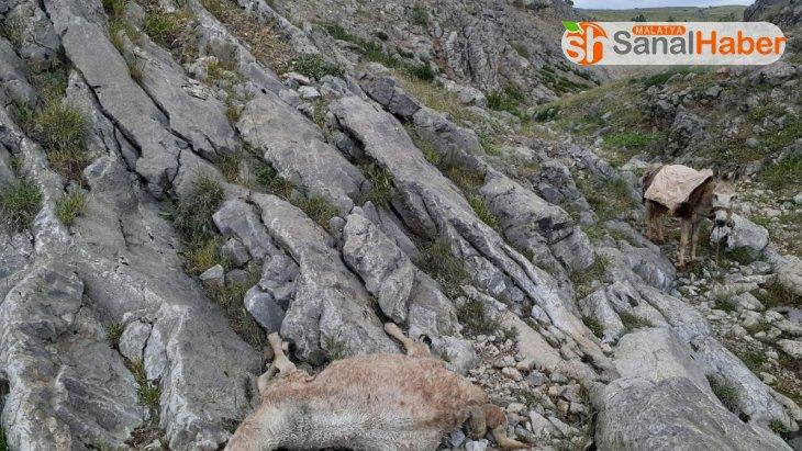 Elazığ'da 30 küçükbaş hayvan sağanak nedeniyle telef oldu