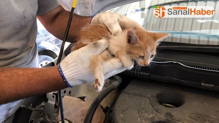 Elazığ'da aracın far kısmına girip sıkışan yavru kedi kurtarıldı