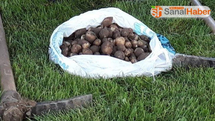 Elazığ'da salep soğanı toplayan 3 kişiye 221 bin TL ceza