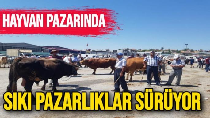 Hayvan pazarında sıkı pazarlıklar sürüyor