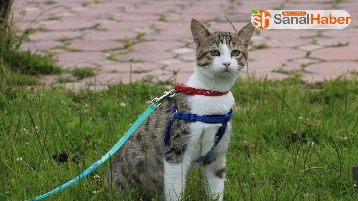 İşkence edilen sokak kedisini sahiplenip sağlığına kavuşturdu