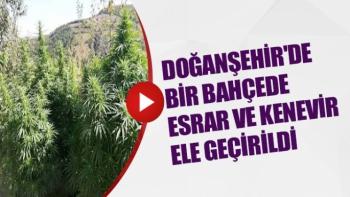 Doğanşehir'de bir bahçede esrar ve kenevir ele geçirildi