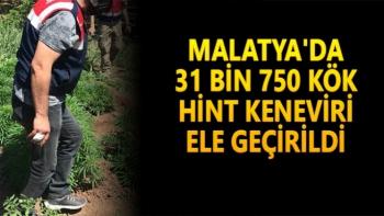Malatya´da 31 bin 750 kök hint keneviri ele geçirildi