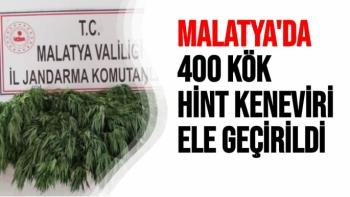 Malatya'da 400 kök Hint keneviri ele geçirildi