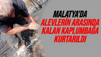 Malatya'da Alevlerin arasında kalan kaplumbağa kurtarıldı