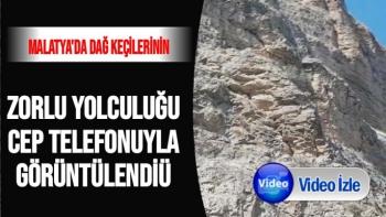 Malatya'da Dağ keçilerinin zorlu yolculuğu cep telefonuyla görüntülendi