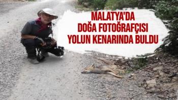Malatya'da doğa fotoğrafçısı yolun kenarında buldu