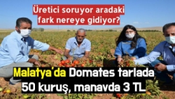 Malatya'da Domates tarlada 50 kuruş, manavda 3 TL