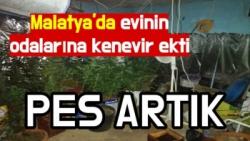 Malatya'da evinin odalarına kenevir ekti