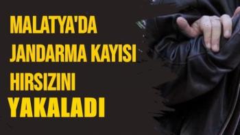 Malatya'da Jandarma Kayısı hırsızını yakaladı
