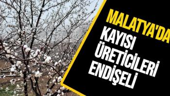 Malatya'da kayısı üreticileri endişeli