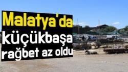 Malatya'da küçükbaşa rağbet az oldu