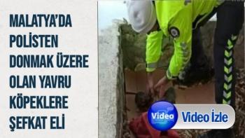 Malatya'da Polisten donmak üzere olan yavru köpeklere şefkat eli
