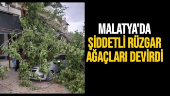 Malatya'da Şiddetli rüzgar ağaçları devirdi