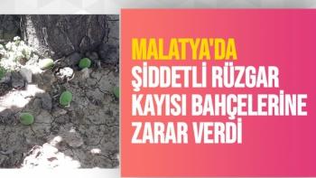 Malatya'da Şiddetli rüzgar kayısı bahçelerine zarar verdi