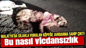 Malatya'da Silahla vurulan köpeğe jandarma sahip çıktı