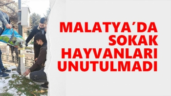 Malatya'da sokak hayvanları unutulmadı