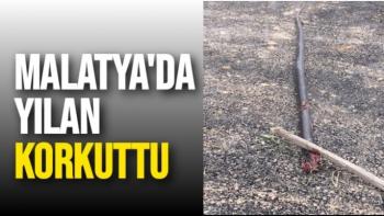 Malatya'da Yılan Korkuttu