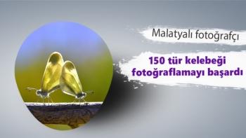 Malatyalı fotoğrafçı 150 tür kelebeği fotoğraflamayı başardı