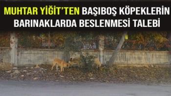 Muhtar Yiğit'ten başıboş köpeklerin barınaklarda beslenmesi talebi
