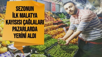 Sezonun ilk Malatya kayısısı çağlaları pazarlarda yerini aldı
