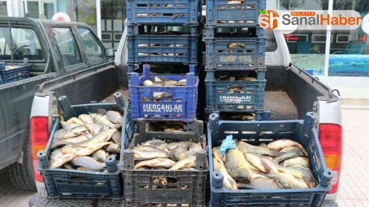 Kaçak avlanan 700 kilo balık ele geçirildi