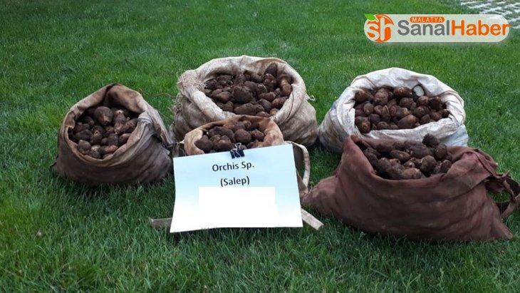 Kaçak salep soğanı toplayan 5 kişiye 368 bin TL ceza kesildi