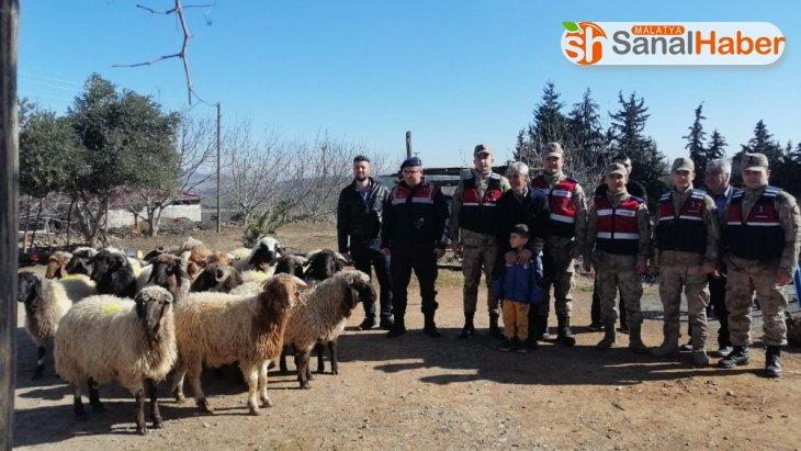 Kahramanmaraş'ta 19 küçükbaş hayvan çalan 3 kişiye adli kontrol