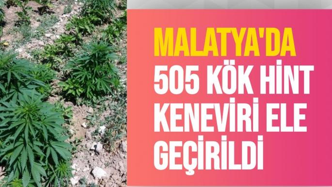Malatya'da 505 kök Hint keneviri ele geçirildi