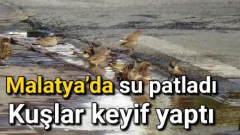 Malatya'da su patladı kuşlar keyif yaptı
