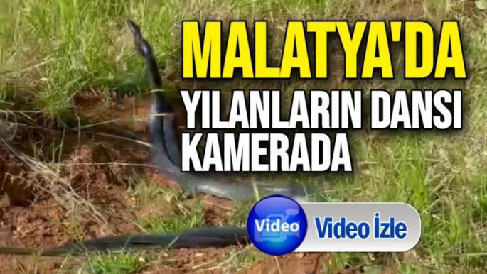 Malatya'da Yılanların dansı kamerada