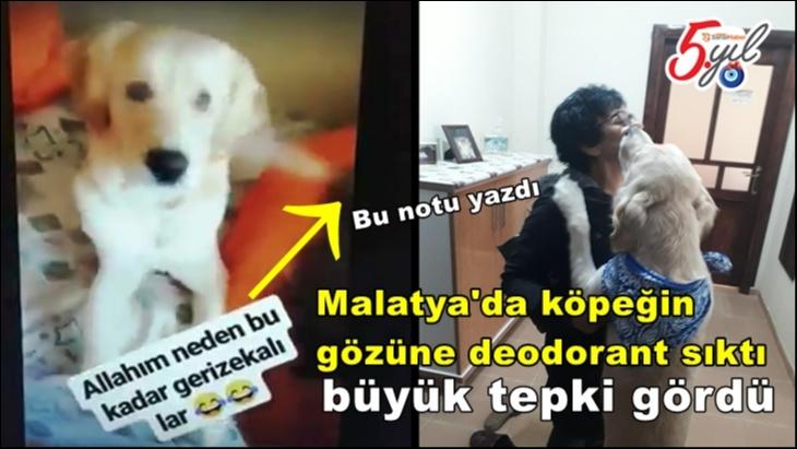 Malatya'da köpeğin gözüne deodorant sıktı