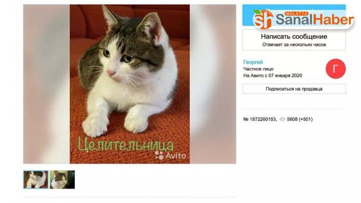Rus kedisi 320 bin dolara satışa çıkarıldı