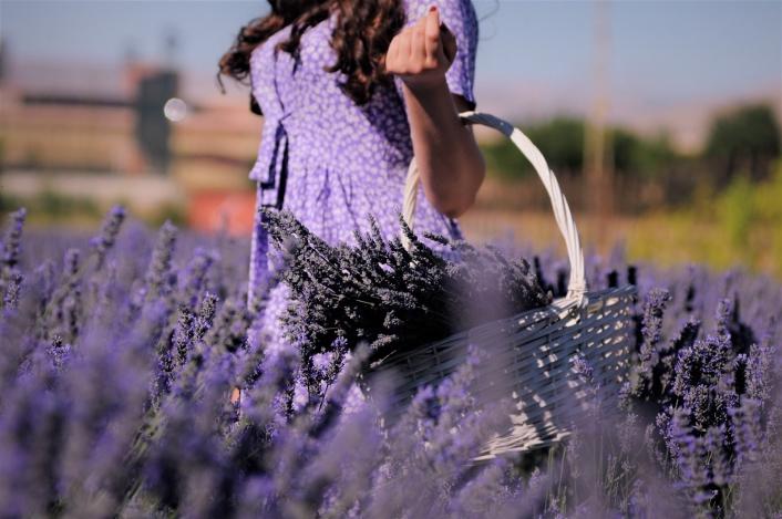 Afşin´de kırsal kalkınma aromatik bitkilerle sağlanacak