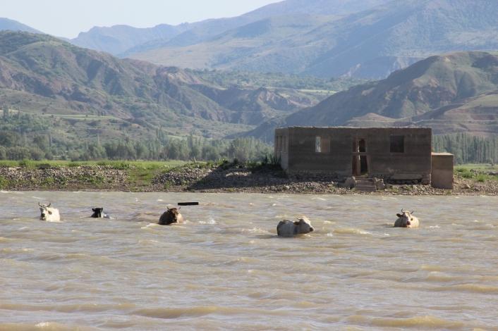 Alarm veren barajda Afrika´yı aratmayan görüntüler