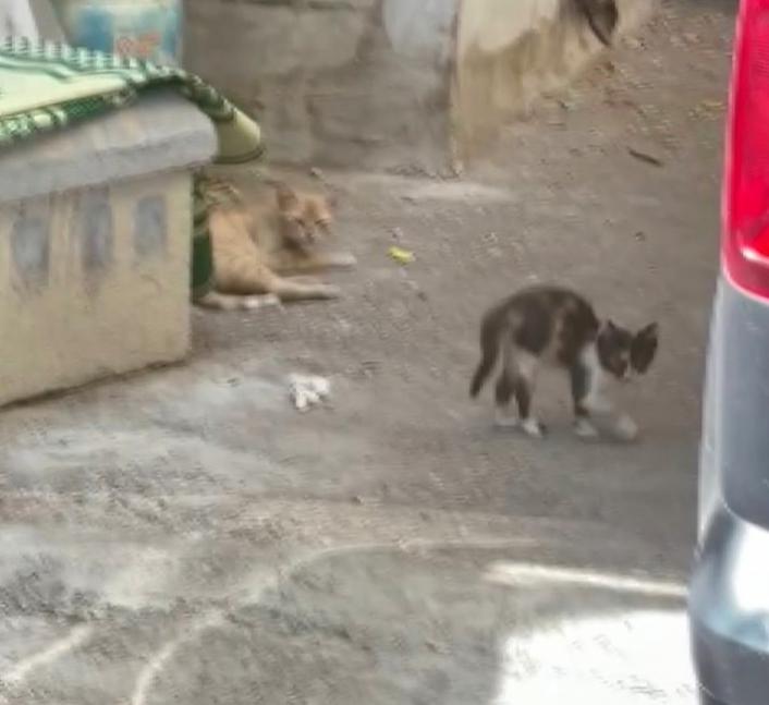 Araçta mahsur kalan kediyi itfaiye kurtardı