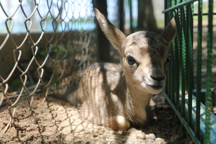 Baharla birlikte hayvanat bahçesi nüfusu artıyor