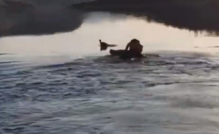 Baraj gölüne düşen güvercin, suya giren muhtar tarafından kurtarıldı