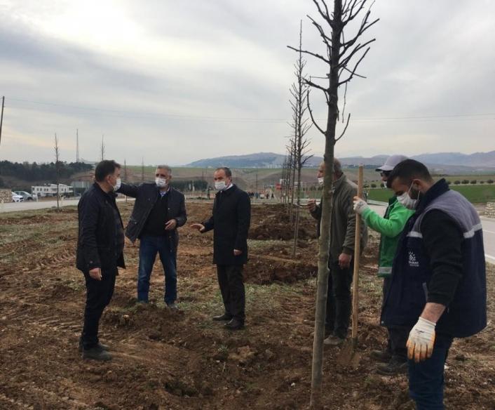Başkan Kılınç ağaçlandırma çalışmalarını inceledi